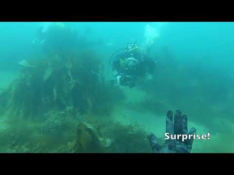 Spearfishing Dover Sole UK