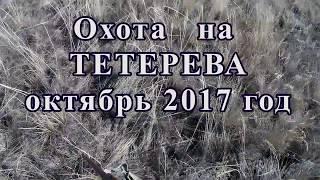 ☝▶ Охота на тетерева 2017