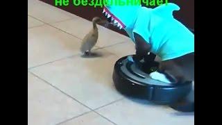 Приколы с котами 2016 новые подборки Которолик выпуск 11 смешные коты