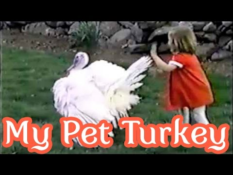 My pet turkey Friendly: Why my family stopped eating turkey for Thanksgiving