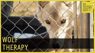 Wolf Therapy | Wolves & Warriors // 60 Second Docs+