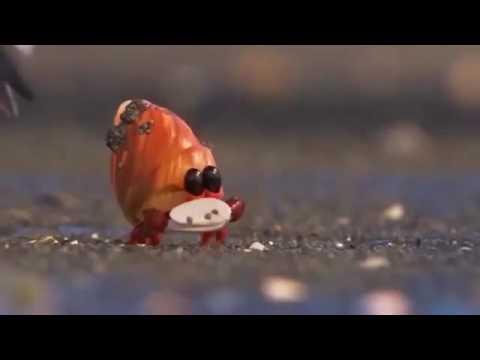 Piper - Cute Bird From Pixar