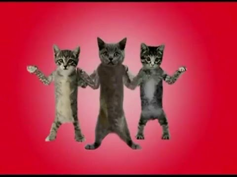 Happy Birthday to You  feat  Funny Dancing Cats