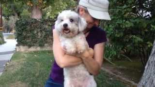 Lily — Poodle Mix For Adoption