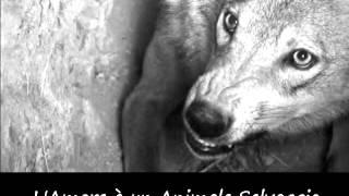 Amour Rammstein traduzione in Italiano
