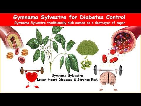 Gymnema Sylvestre Herb Lower Bs A1c Triglycerides Ldl Bp