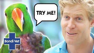 BIRDS BEHAVING BADLY!! | Bondi Vet | COMPILATION