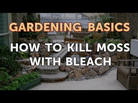 How to Kill Moss With Bleach