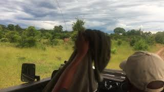 Африка.Зимбабвэ.Джип-сафари.И все больше животных у нас по маршруту.Март2018