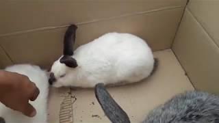 На базар за кроликами
