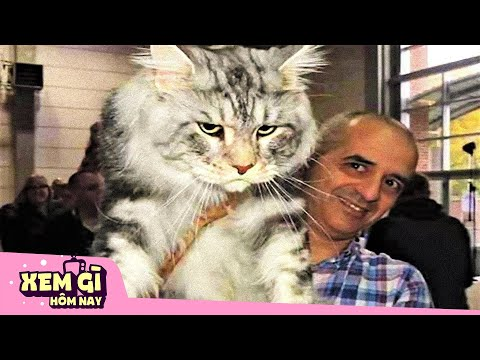 """10 Giống Mèo ĐẮT NHẤT HÀNH TINH   Chỉ """"Con Sen"""" Đại Gia Mới Đủ Trình Nuôi Boss   Xem gì hôm nay"""
