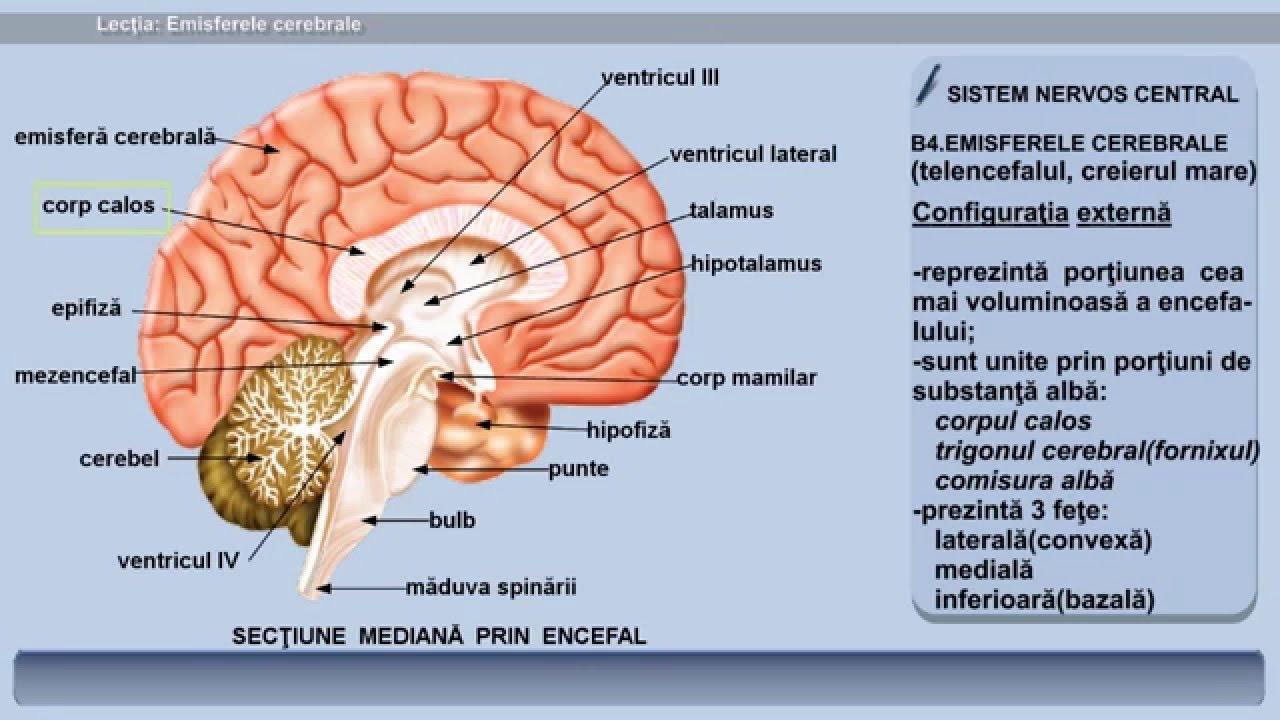 Parazitarea tratamentului afectării creierului