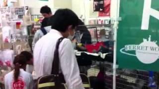 http://www.nettai.co.jp/ → 熱帯倶楽部 http://www.ferret-world.jp/ →...