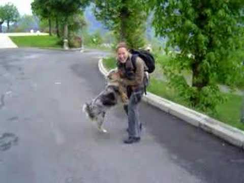 Reunion with Pema, The Australian Shepherd