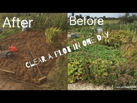 How To Clear An Allotment In One Day (Davids Plot)
