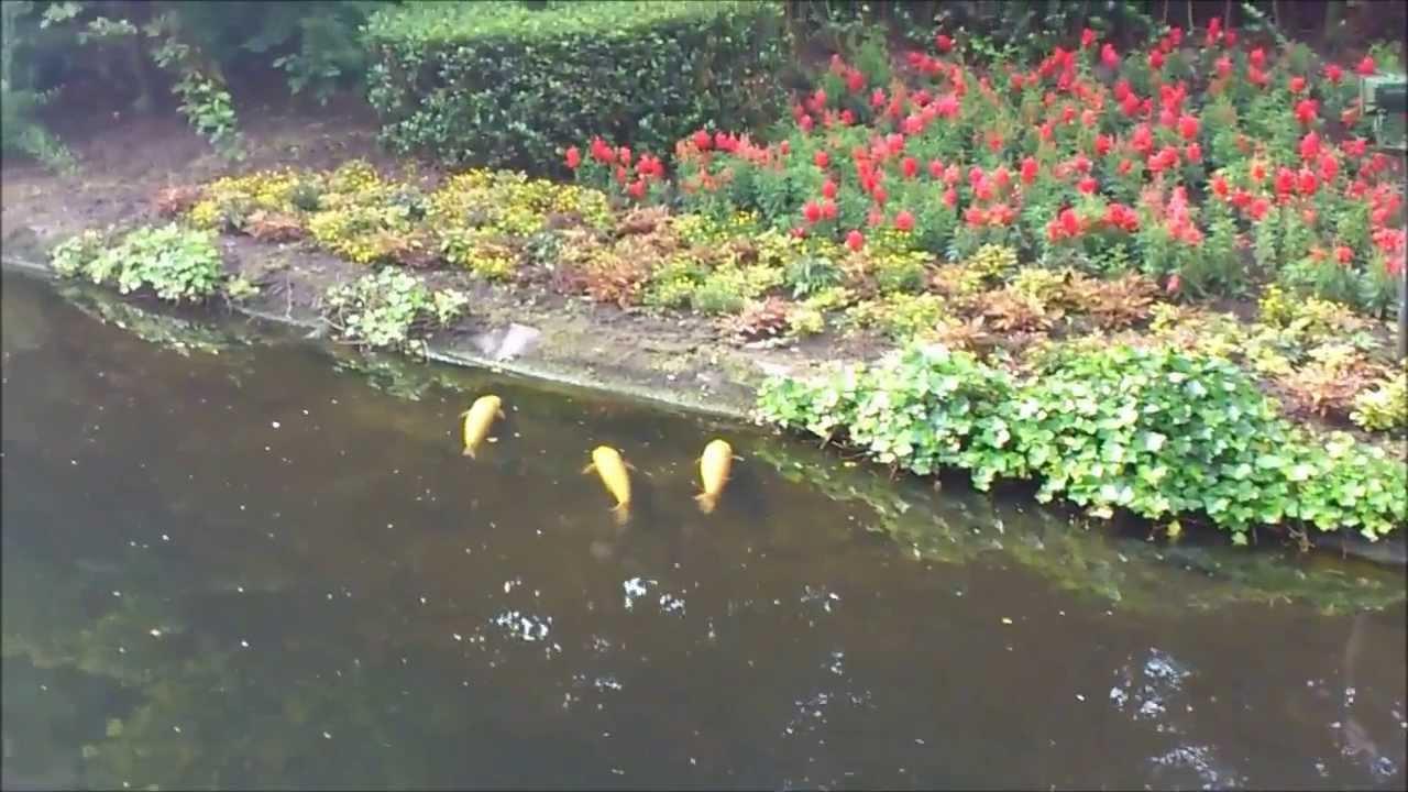 Vissen in vijver bij pardoes promenade efteling 2013 hd for Vissen vijver