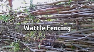Grow/build A Free Fence! | Diy Woven Branch Design | Wattle Fence