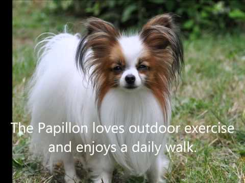 Papillons Are Us