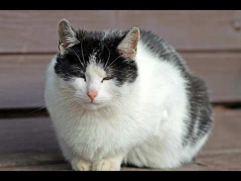 Mon Chat Est Diabétique
