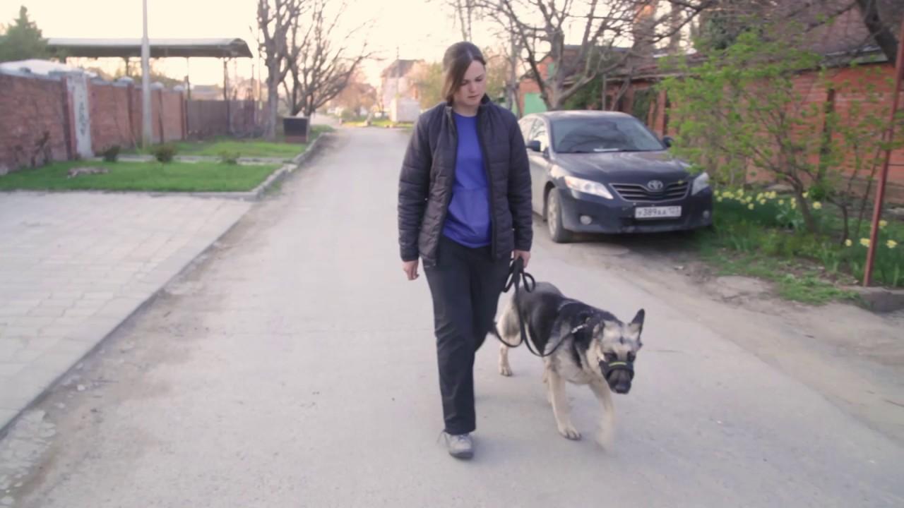 Дрессировка собак. Почему собака тянет. Как гулять на провисшем поводке.