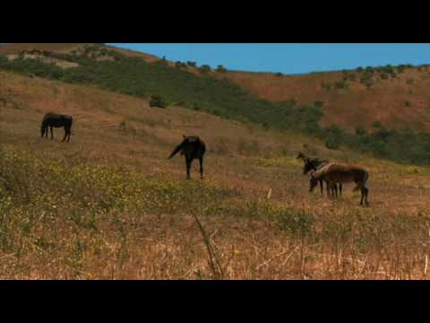 Return to Freedom Wild Horse Sanctuary