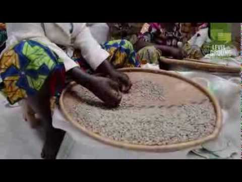 Level Ground Trading: Coffee sorting D.R. Congo 2013