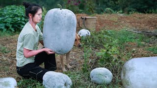 Have You Seen Huge Winter Melon Like This?