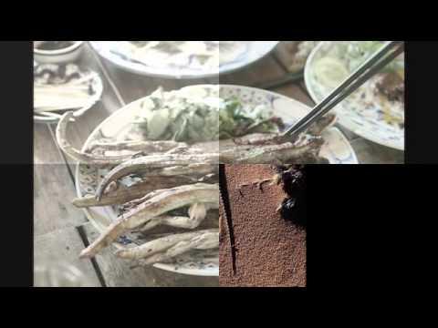 Một số hình ảnh về con thằn lằn