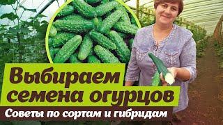 Огурцы в теплицах Садов России. Отзыв агронома