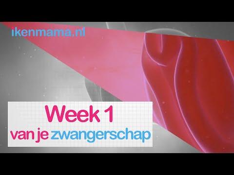 1 Week Zwanger? Bekijk Symptomen, Informatie Over De Echo En Je Kindje En Je Lichaam | Ikenmama.nl