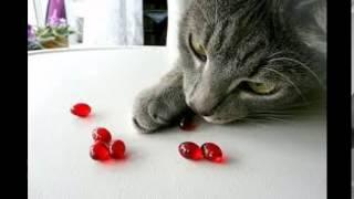витамины для кошек гамавит цена