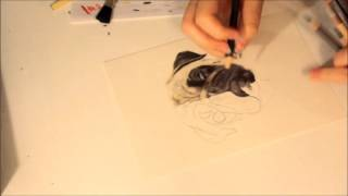 Speed Drawing - Dog Portrait Pug