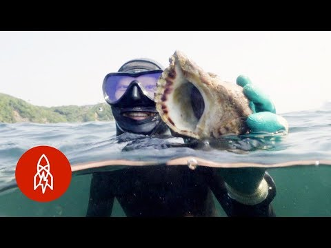 Freediving With Japan's Pearl Divers (Việt Sub)