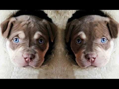 DOG BREED The 10 Most Gentle Fastest Dog Breed [Mr Fahey]