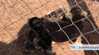 Пункт передержки отловленных в Твери собак