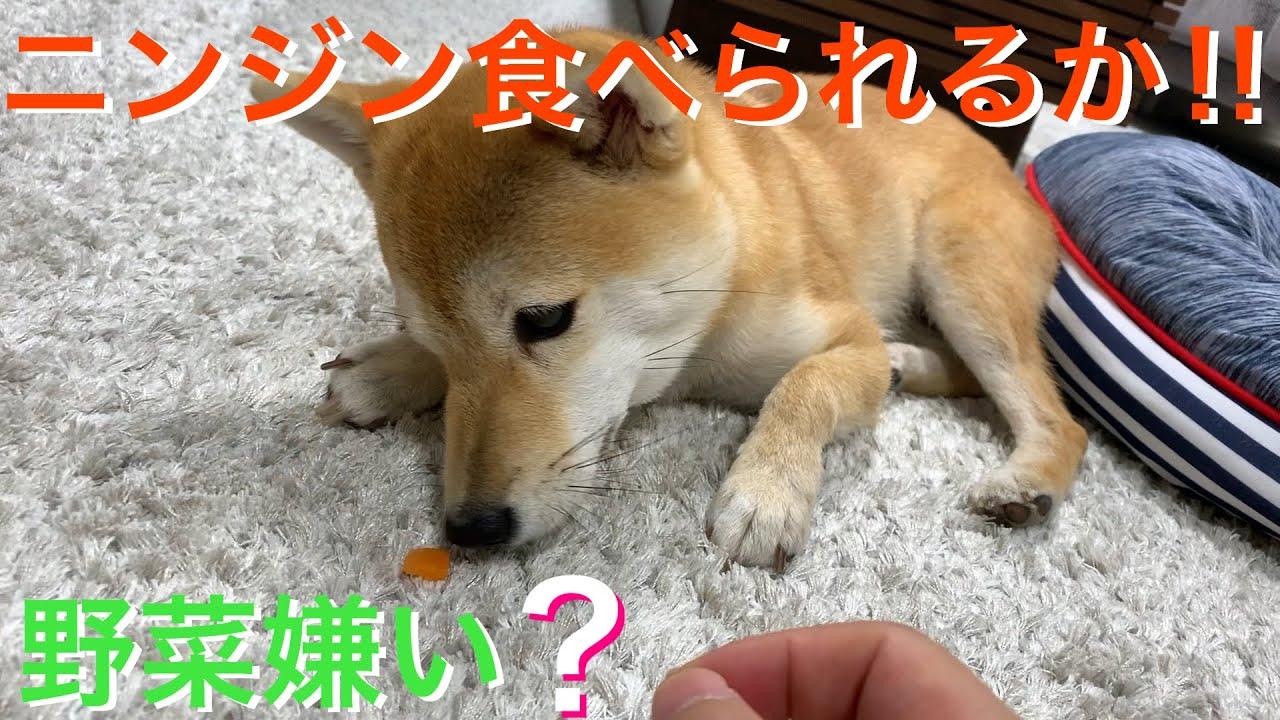 食べ られる 野菜 犬 が