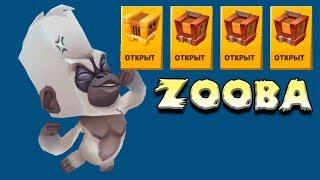 Открываем сундуки Битва животных! мультяшный пабг! Zooba Free For All Battle Game #3