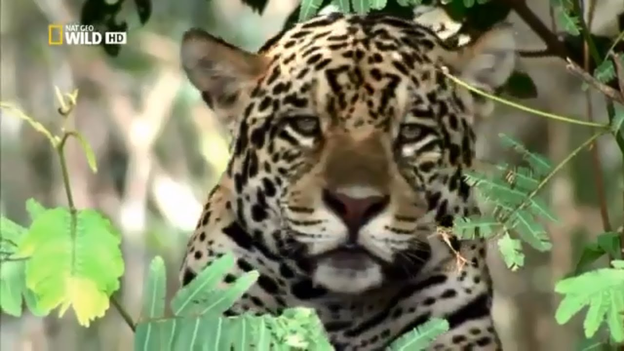 HD Nature Wildlife Documentary New 2018 Nat Geo Wild Animals BBC