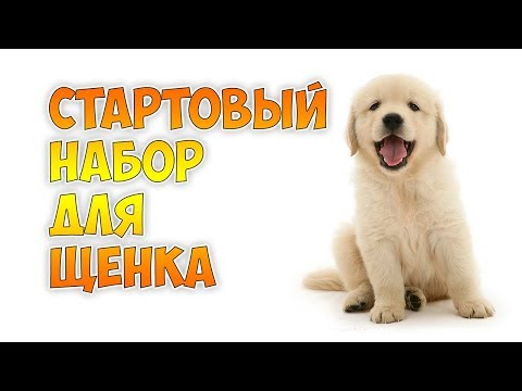 Вопрос: Как подготовиться к появлению щенка у вас дома?