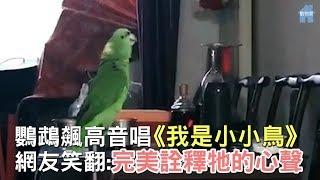 鸚鵡用生命飆唱《我是小小鳥》!網友聽了直接懷疑人生