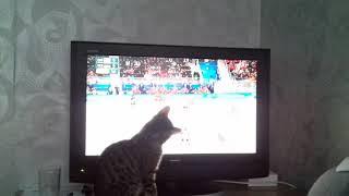 Кошка Алиса на олимпиаде 25.02.2018г.В финале болеет за наших Германия:Россия