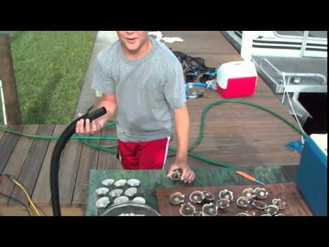 How To: Clean Fresh Scallops