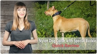 All Weather Nylon Dog Collar With Special Buckle - Review