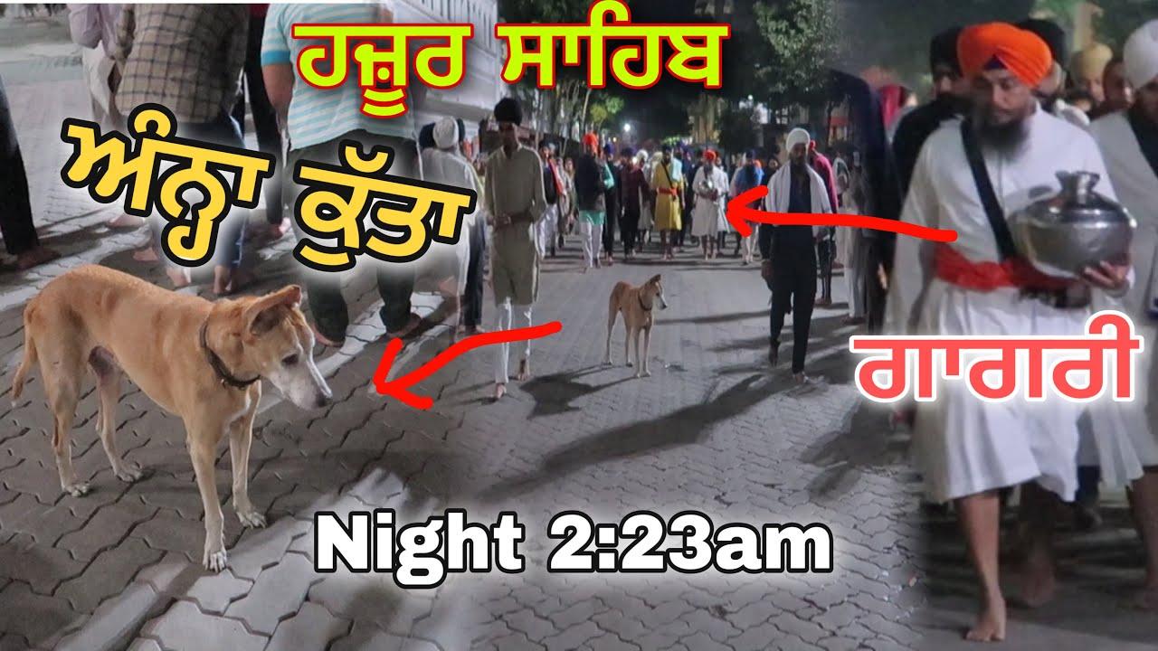ਚਮਤਕਾਰ Blind Dog ਕੋਈ ਰੱਬੀ ਰੂਹ ਅੰਨ੍ਹਾ ਕੁੱਤਾ Hazoor Sahib ਗਾਗਰ ਕੁੰਡ ਸੱਚਖੰਡ  ਹਜ਼ੂਰ ਸਾਹਿਬ Full Reality - YouTube