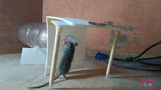 5 Easy Mouse/Rat Trap Homemade
