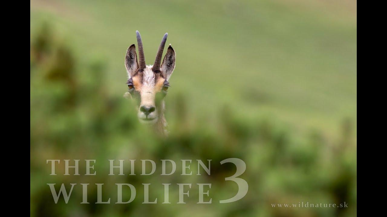 THE HIDDEN WILDLIFE III. (2018)