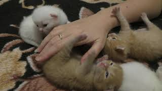Милые и ласковые котята ИЩУТ ХОЗЯИНА!!! Котятам 1 неделя) ОТДАМ КОТЯТ