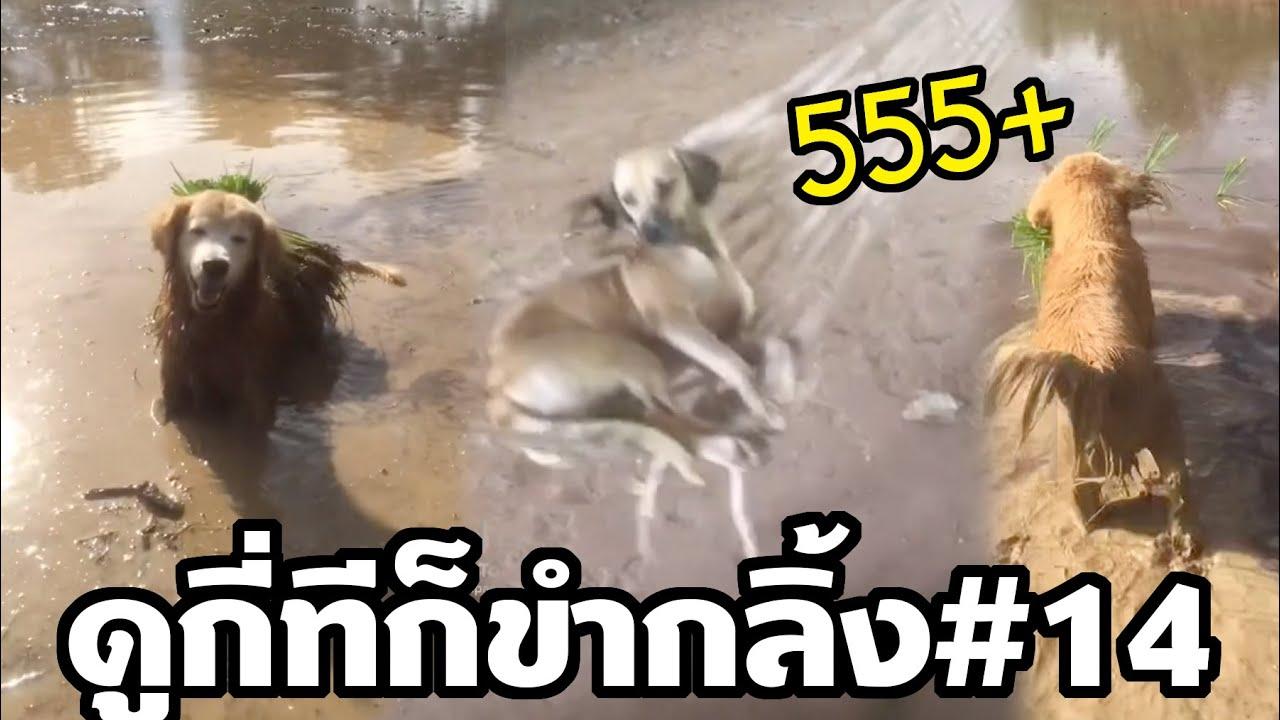 หัวเราะฮาขำมาก หมาจอมซ่ากับเป็นจอมจิก หมาช่วยคนทำนา (ดูกี่ทีก็ขำกลิ้ง EP14)