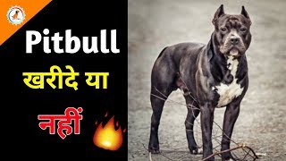 American Pitbull Dog Price buy Or Not / Dogs Price List in India / most expensive pitbull dog