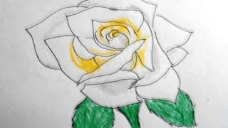 yellow rose drawing draw easy drawings way paintingvalley
